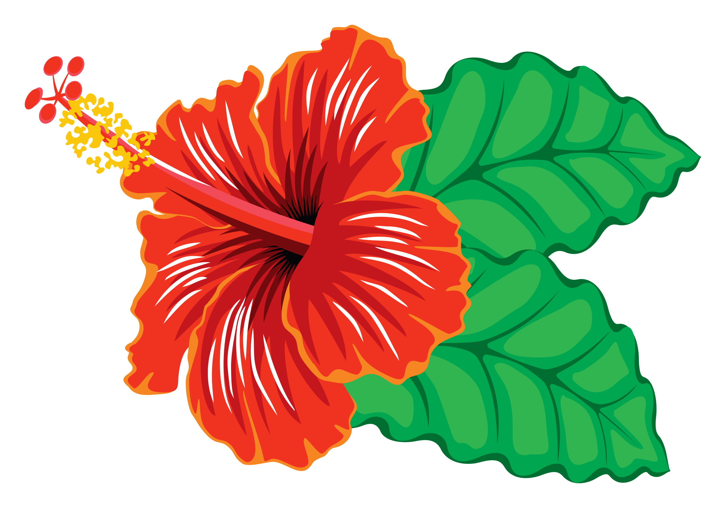 Hibiscus clipart #12, Download drawings