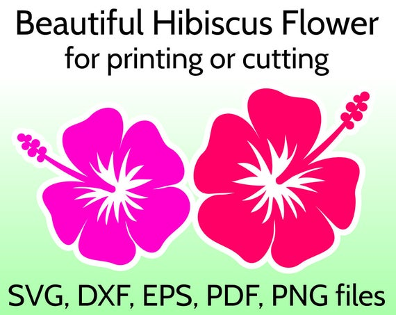 hibiscus flower svg #582, Download drawings