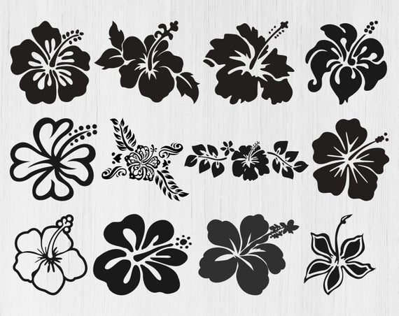 hibiscus flower svg #586, Download drawings