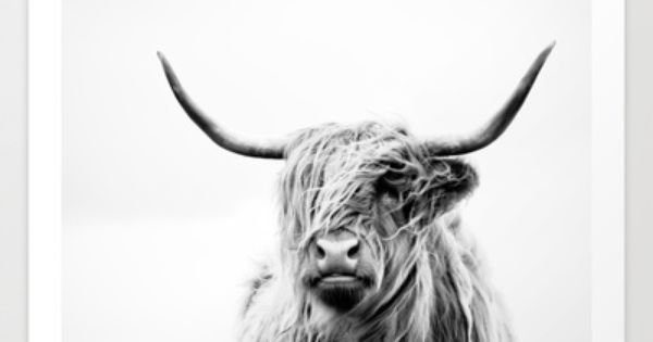Highland Cattle clipart #6, Download drawings