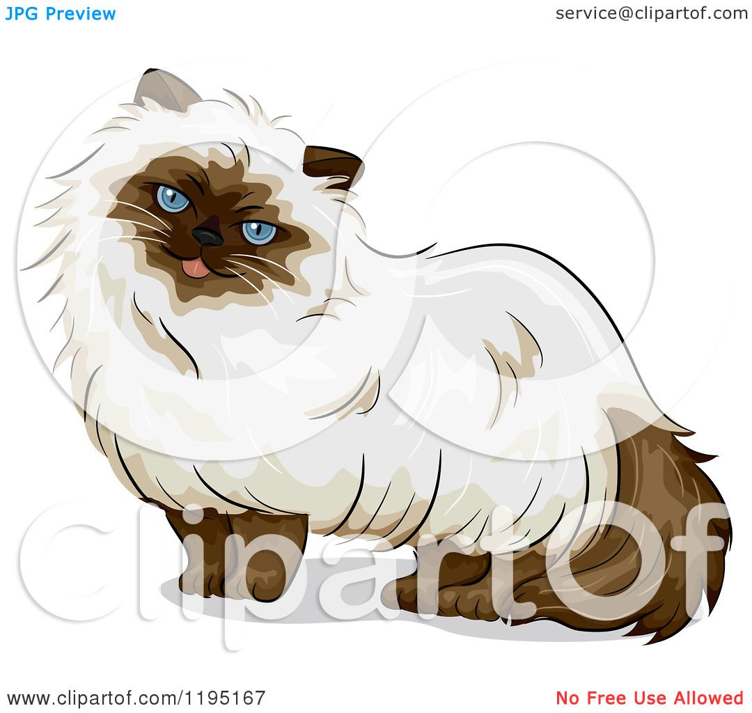 Himalayan Cat clipart #4, Download drawings