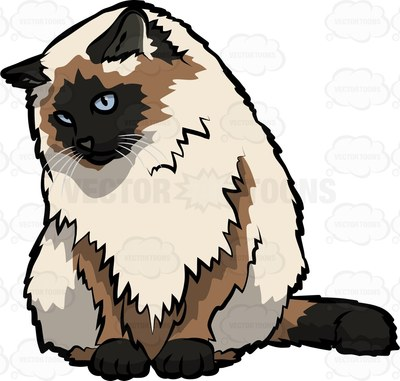 Himalayan Cat clipart #2, Download drawings