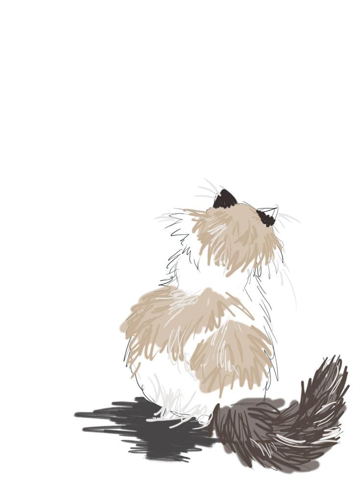 Himalayan Cat clipart #20, Download drawings