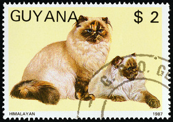 Himalayan Cat clipart #3, Download drawings