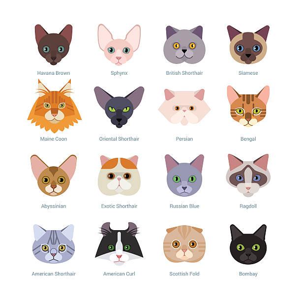 Himalayan Cat clipart #6, Download drawings