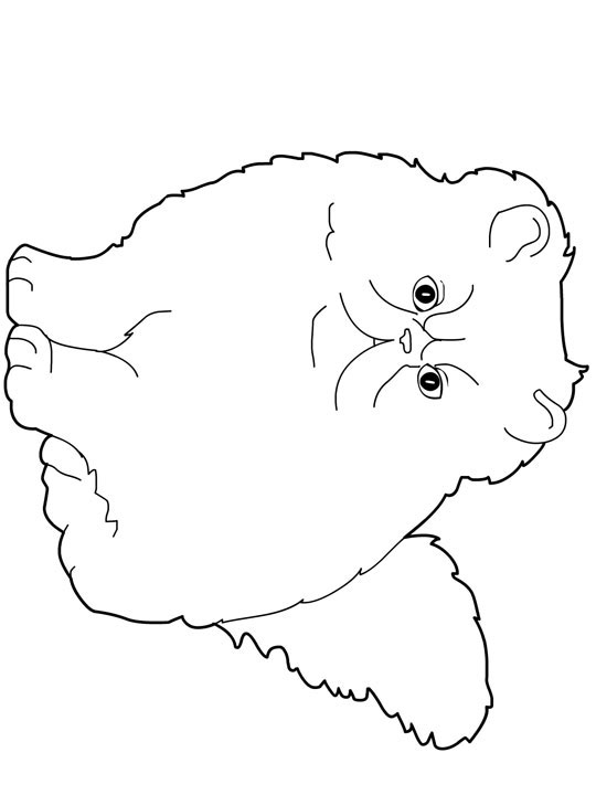 Himalayan Cat coloring #5, Download drawings