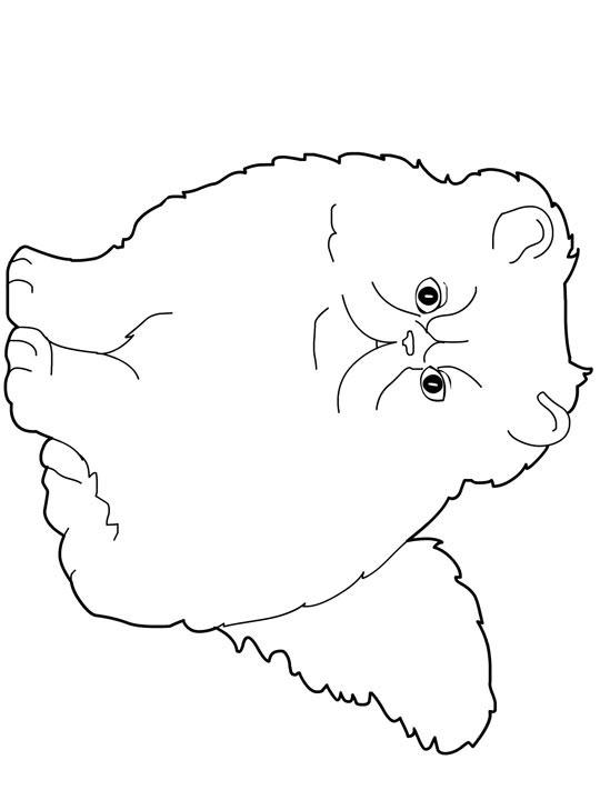 Persian Cat coloring #7, Download drawings