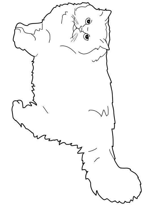 Persian Cat coloring #5, Download drawings