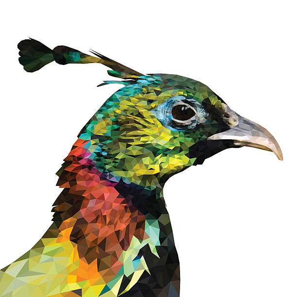 Himalayan Monal clipart #4, Download drawings