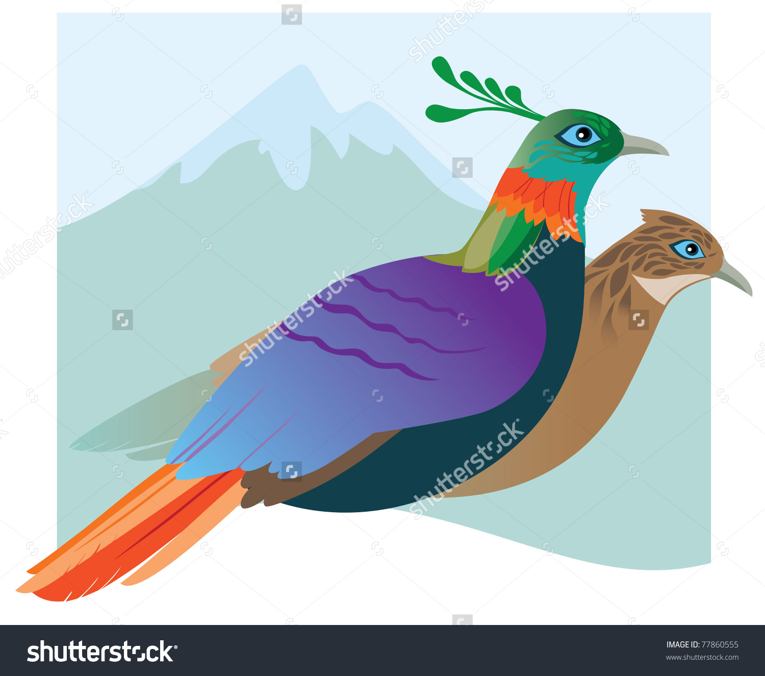 Himalayan Monal clipart #18, Download drawings