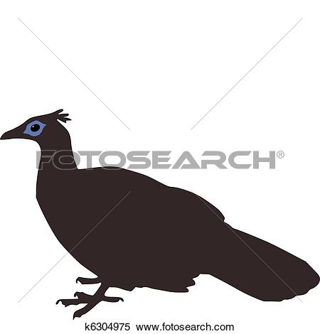 Himalayan Monal clipart #10, Download drawings