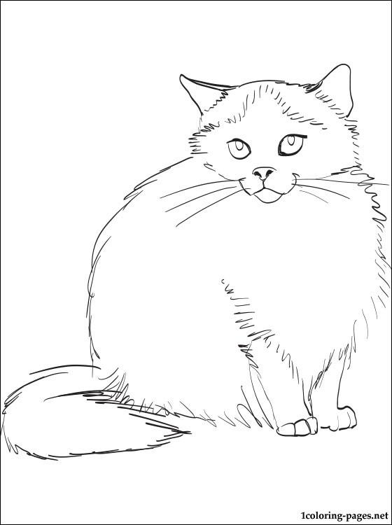 Himalayan Cat coloring #19, Download drawings
