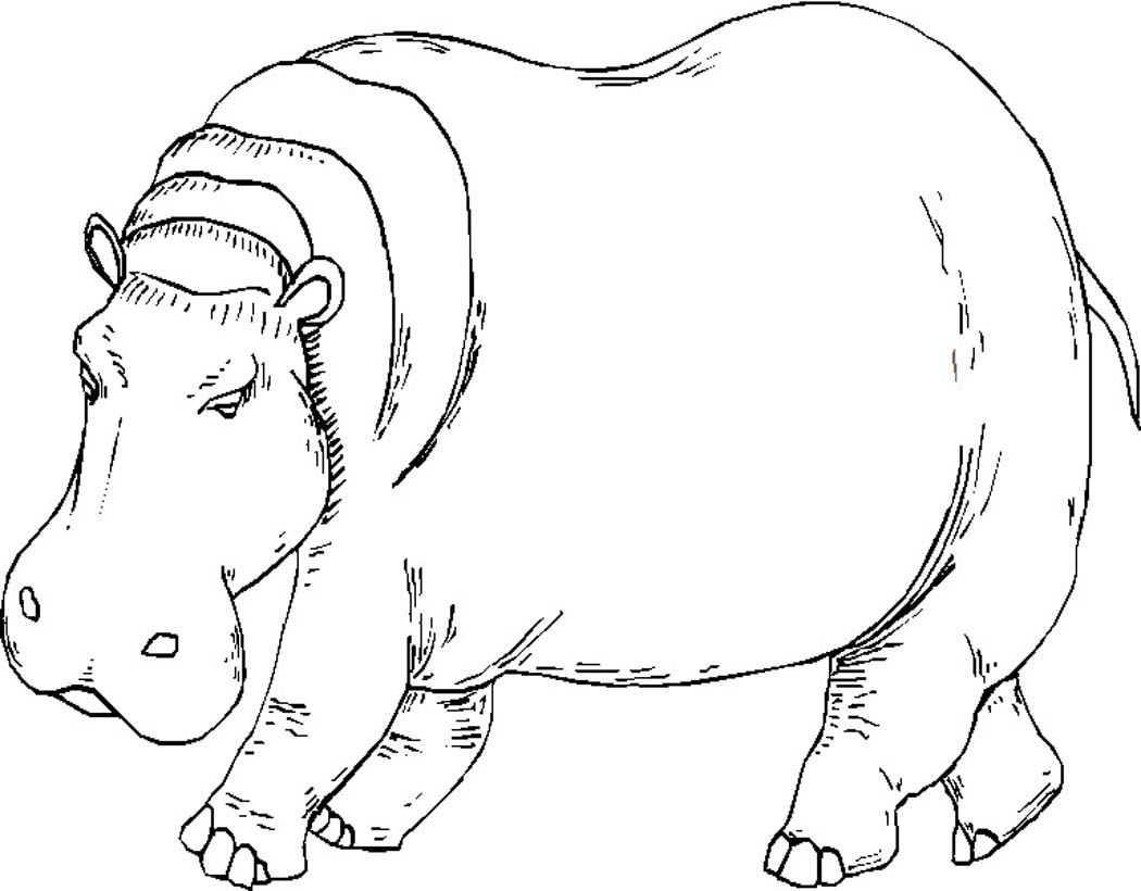 Hippo coloring #1, Download drawings