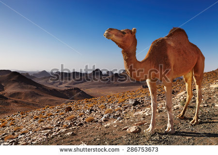 Hoggar Mountains clipart #8, Download drawings