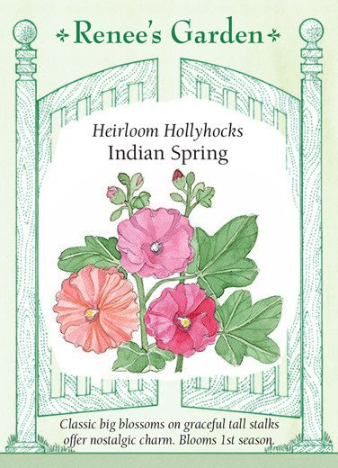 Hollyhocks clipart #15, Download drawings