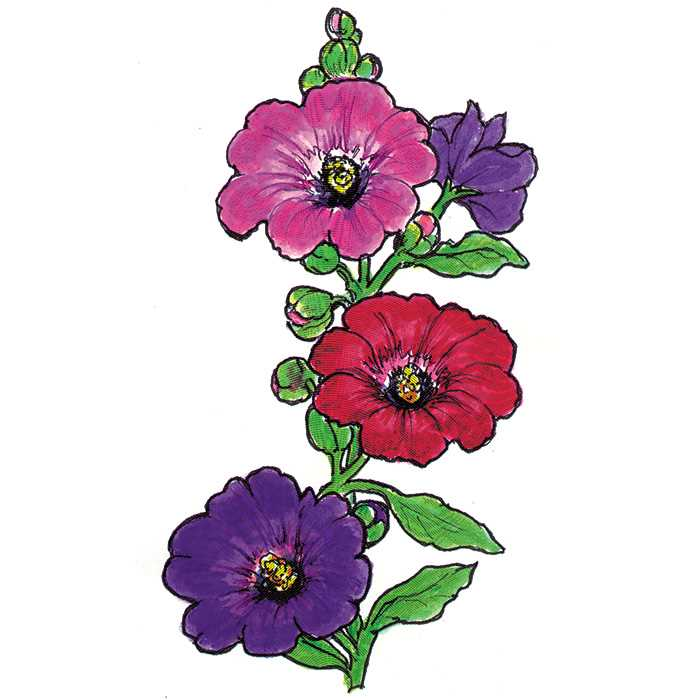 Hollyhocks clipart #9, Download drawings