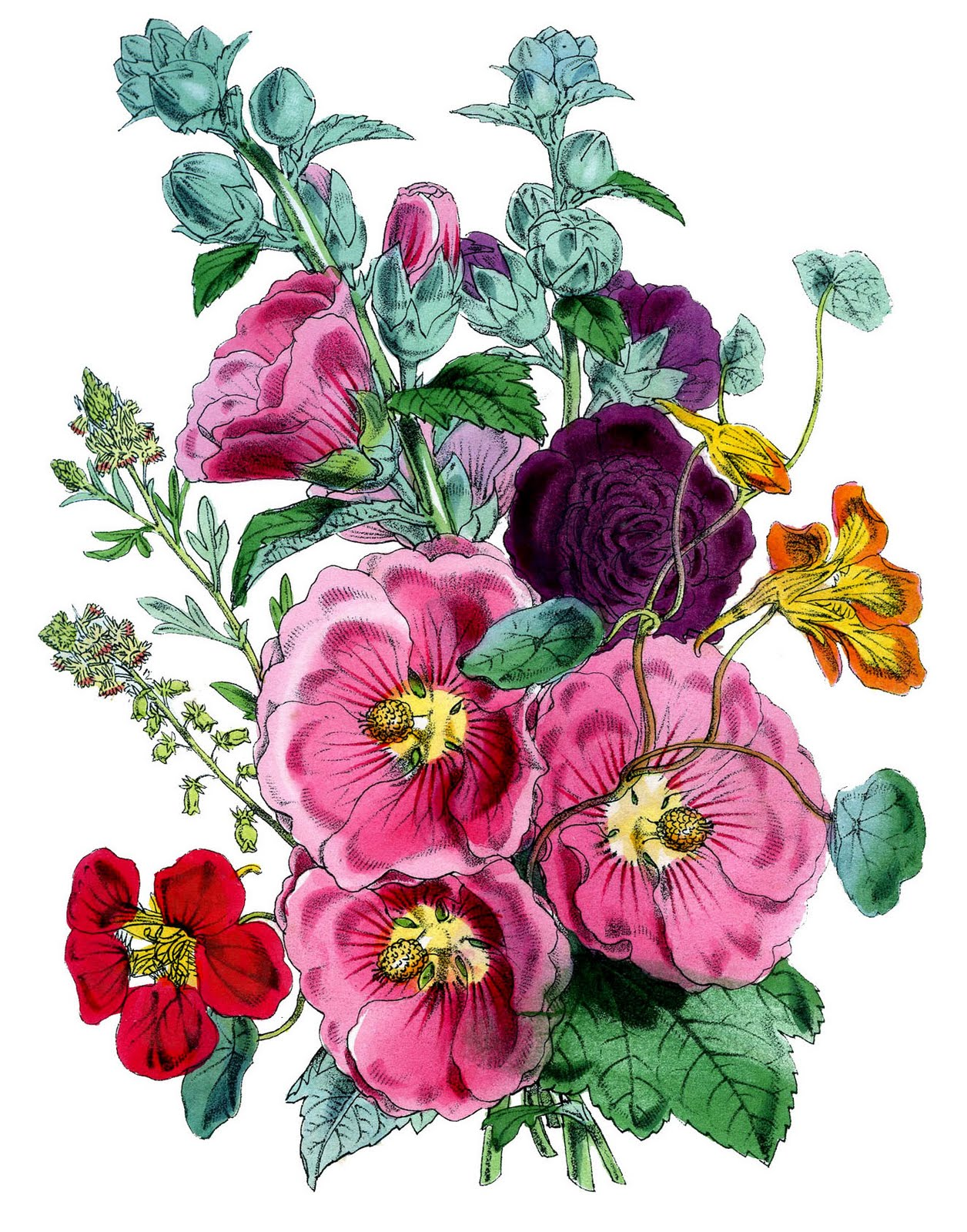 Hollyhocks clipart #19, Download drawings