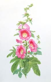 Hollyhocks clipart #4, Download drawings