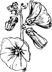Hollyhocks clipart #16, Download drawings