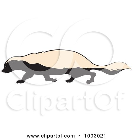 Honey Badger clipart #9, Download drawings