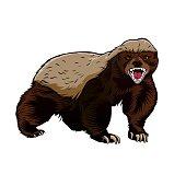 Honey Badger clipart #20, Download drawings