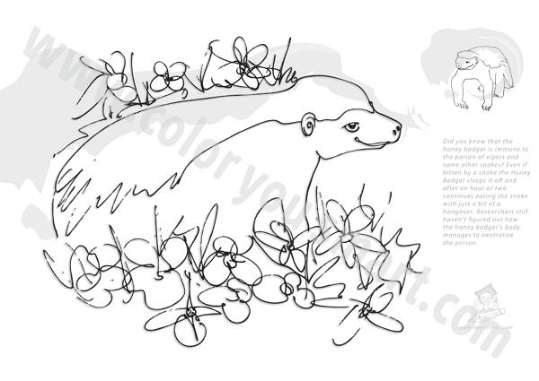 Honey Badger coloring #16, Download drawings