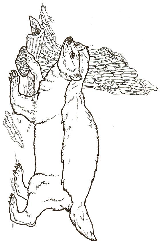 Honey Badger coloring #3, Download drawings