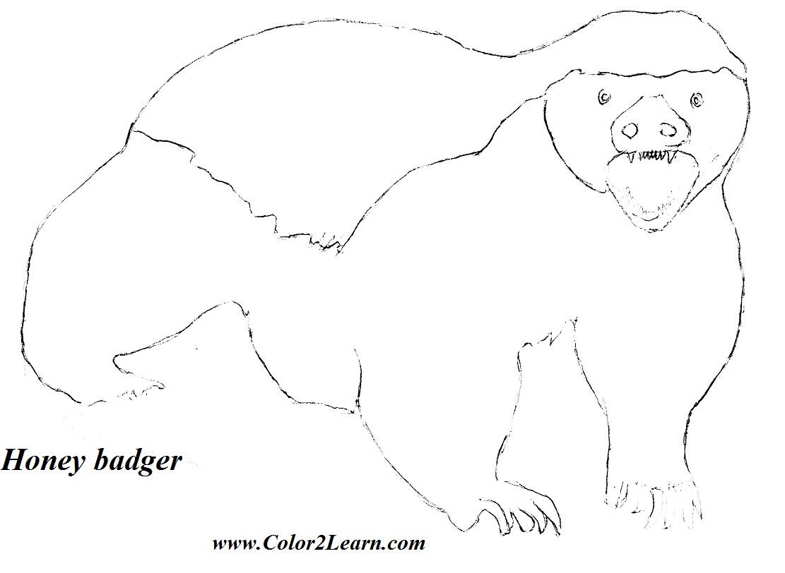 Honey Badger coloring #5, Download drawings