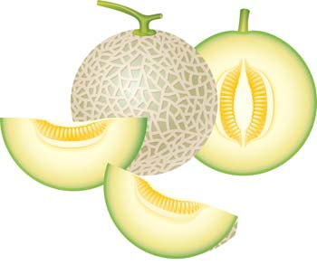 Honey Dew Melon clipart #12, Download drawings