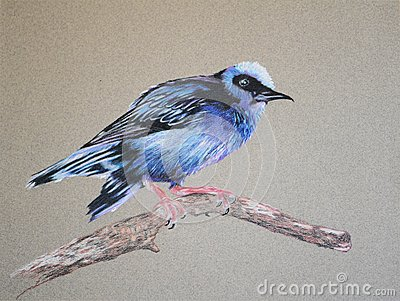 Honeycreeper clipart #8, Download drawings