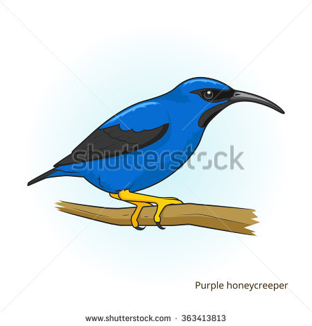Honeycreeper clipart #2, Download drawings