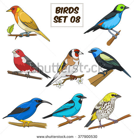 Honeycreeper clipart #15, Download drawings
