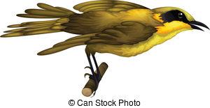 Honeyeater clipart #1, Download drawings