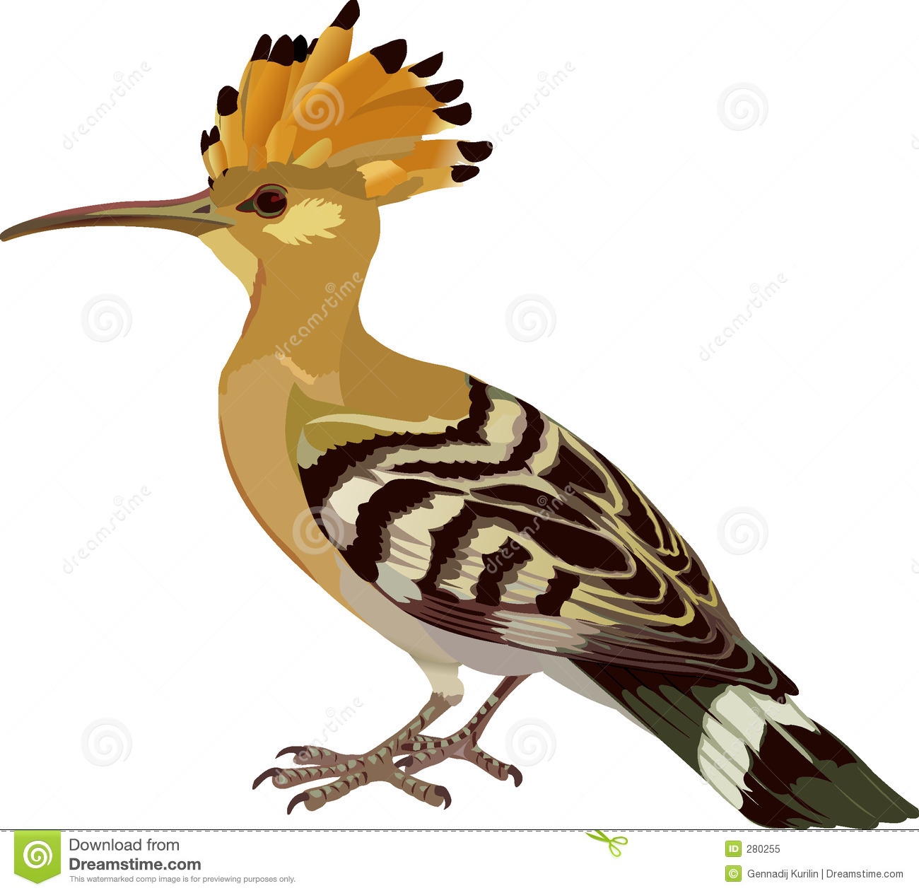Hoopoe  clipart #8, Download drawings