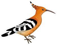 Hoopoe  clipart #11, Download drawings