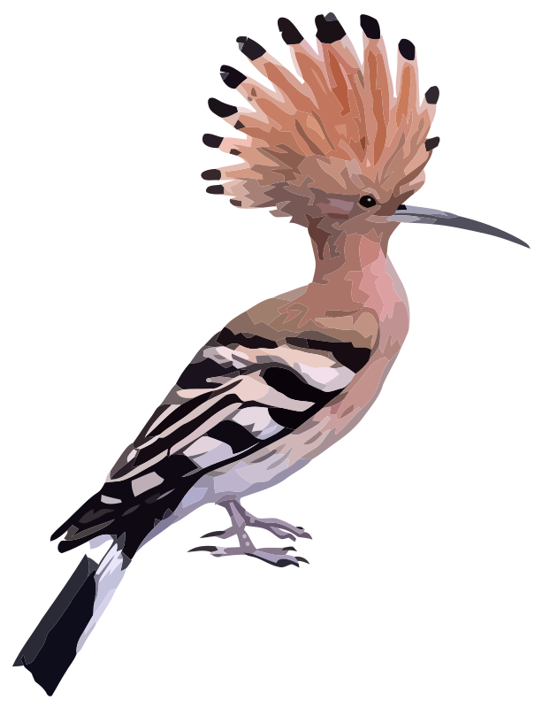 Hoopoe  clipart #3, Download drawings