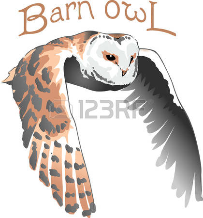 Hooter clipart #20, Download drawings