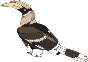 Hornbill clipart #15, Download drawings
