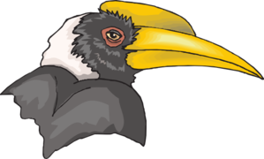 Hornbill clipart #10, Download drawings
