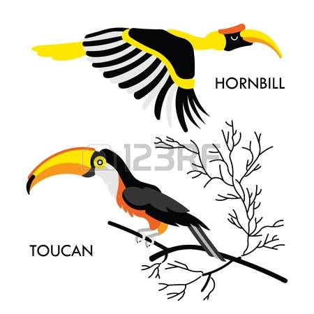 Hornbill clipart #7, Download drawings