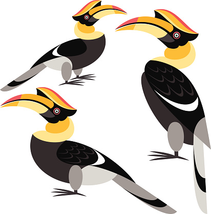 Hornbill clipart #6, Download drawings