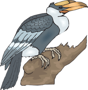 Hornbill clipart #5, Download drawings