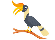 Hornbill clipart #9, Download drawings
