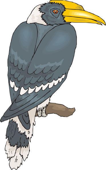 Hornbill clipart #16, Download drawings