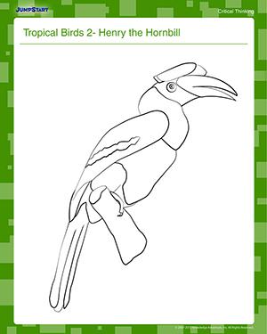Hornbill coloring #5, Download drawings