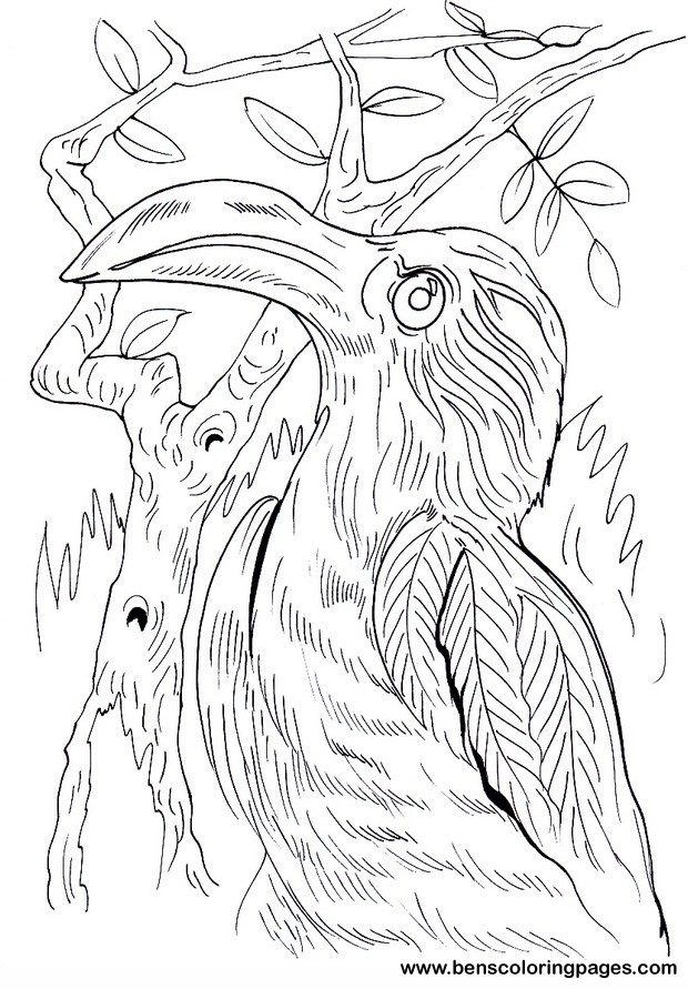 Hornbill coloring #17, Download drawings