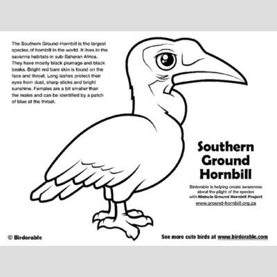 Hornbill coloring #10, Download drawings