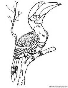 Hornbill coloring #12, Download drawings