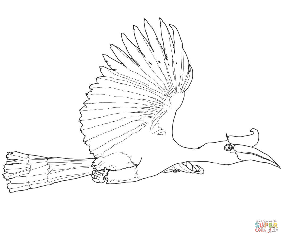 Red-billed Hornbill coloring #3, Download drawings