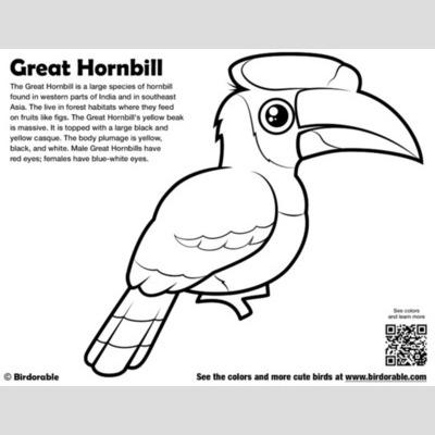Hornbill coloring #3, Download drawings